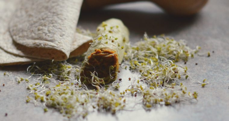 Co na uczelnię? #22 – tortilla z pastą dyniową i pieczarkami