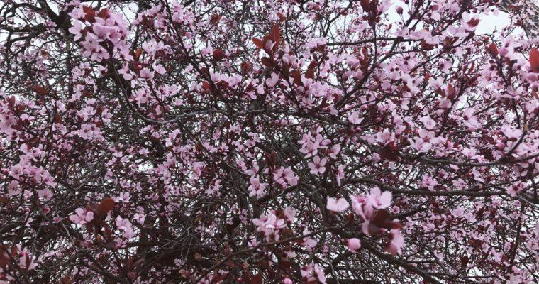 Wiosenne tapety we francuskim klimacie DO POBRANIA