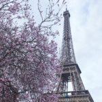 Magnolie i kwitnące drzewa owocowe w Paryżu