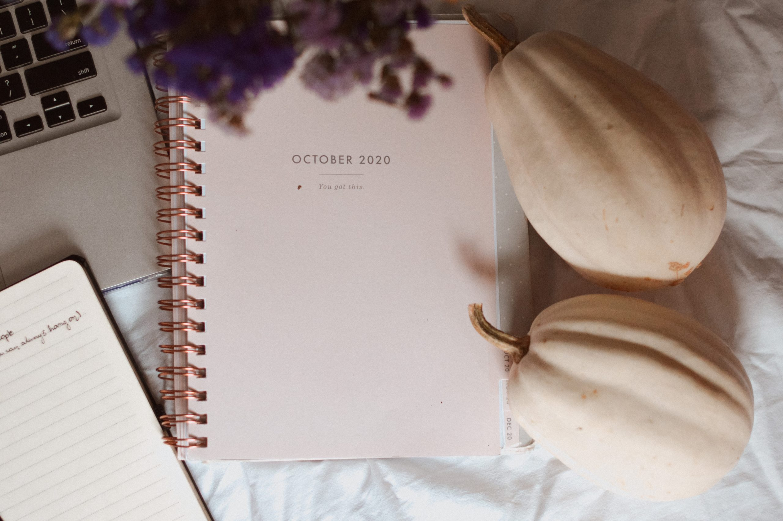 planner, biała dynia, studia